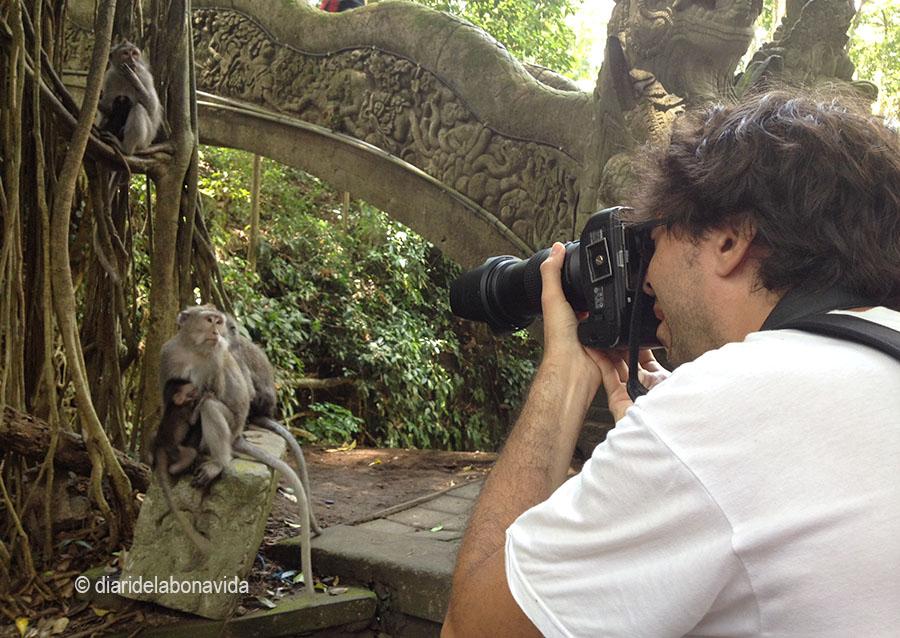 Fent fotos als micos