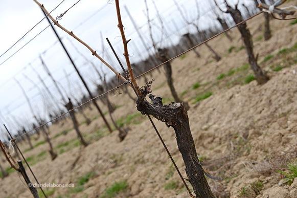 I les vinyes (que ja han donat els seus fruits) són les protagonistes.