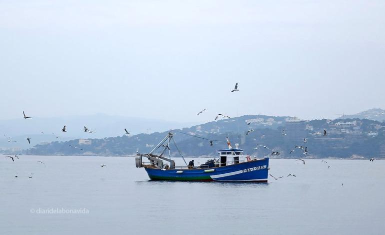 palamos barca pesca