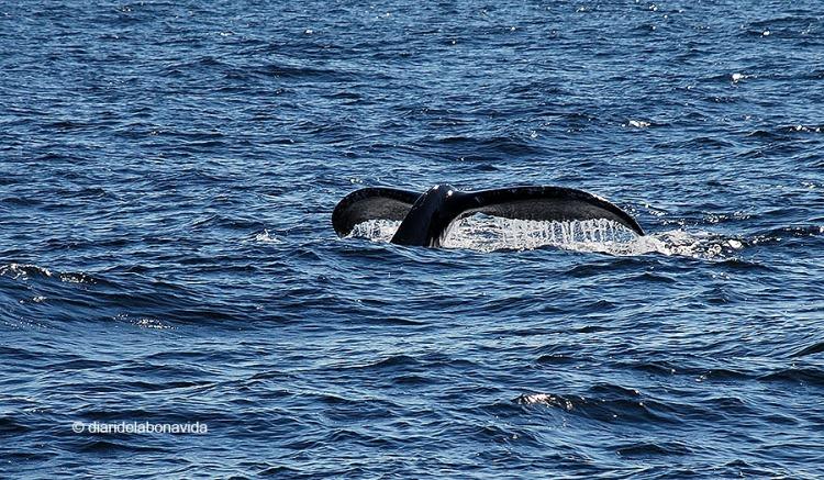 whale_boston_1