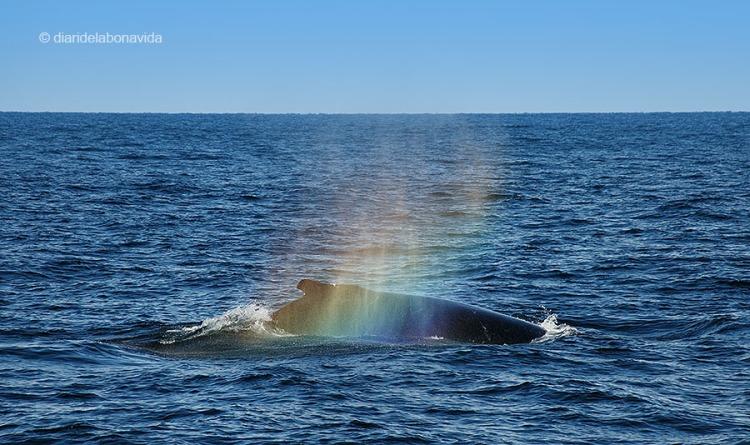 whale_boston_2