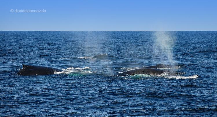 whale_boston_4