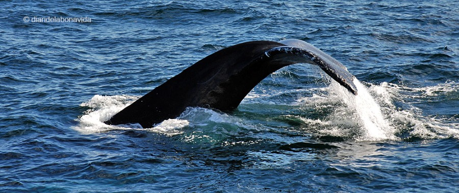 whale_boston_6