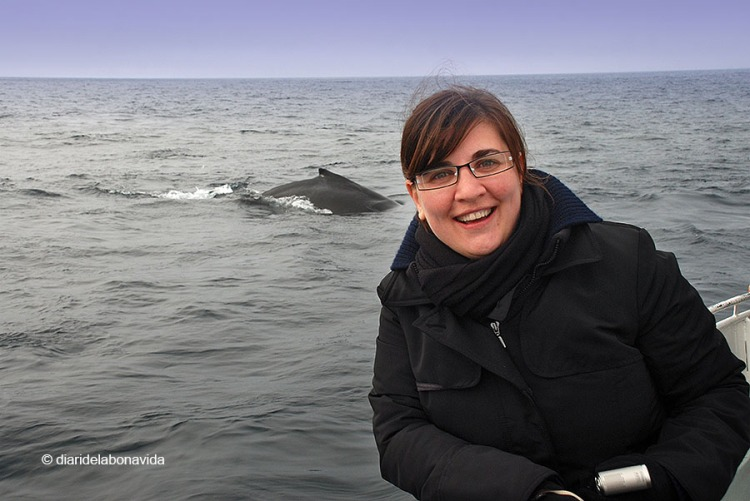 whale_monterey_01