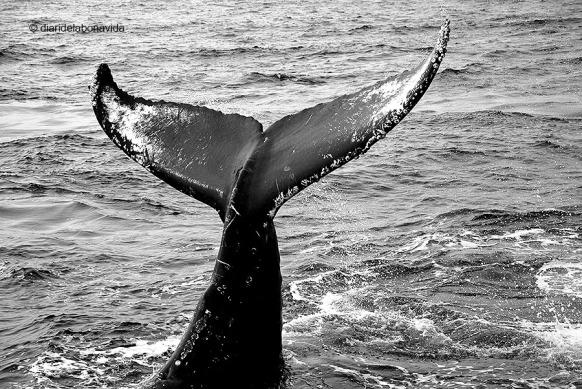 whale_monterey_02