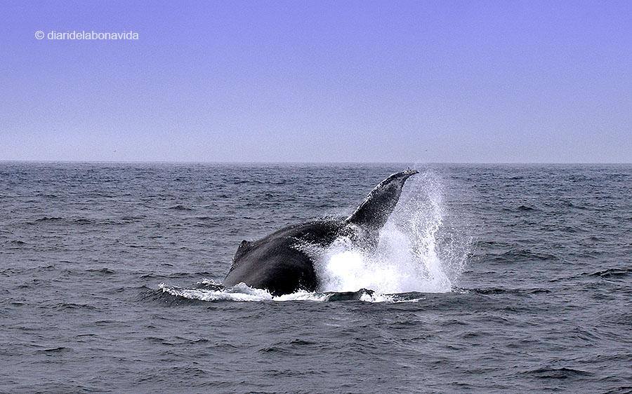 whale_monterey_03
