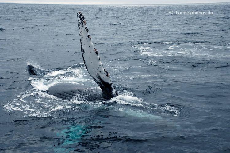 whale_monterey_06