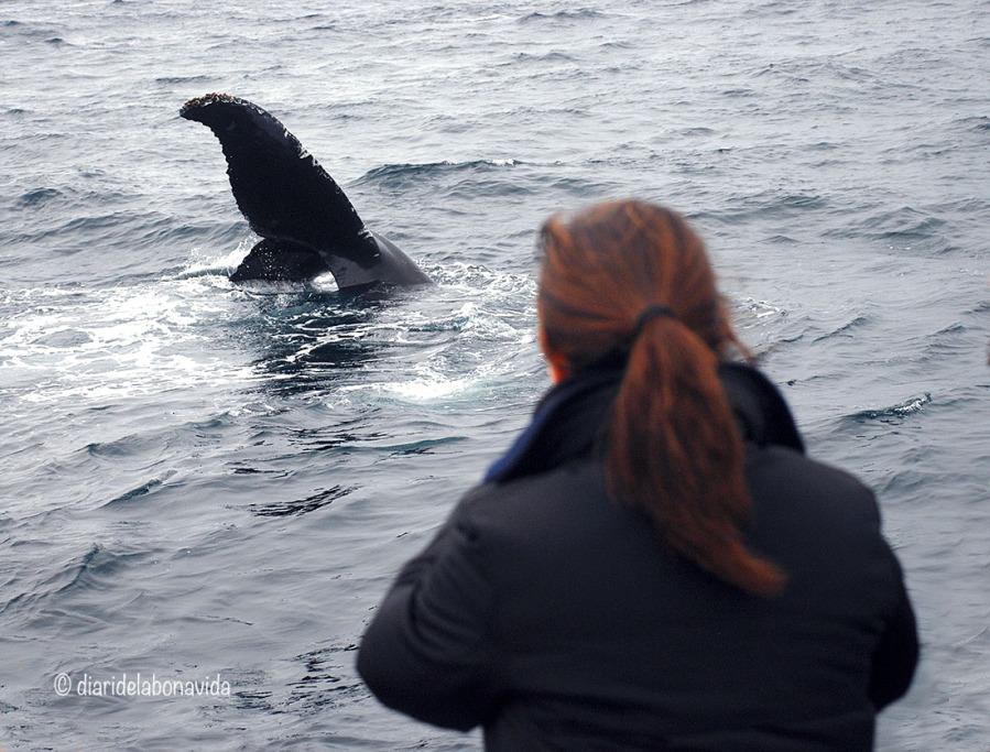 whale_monterey_08