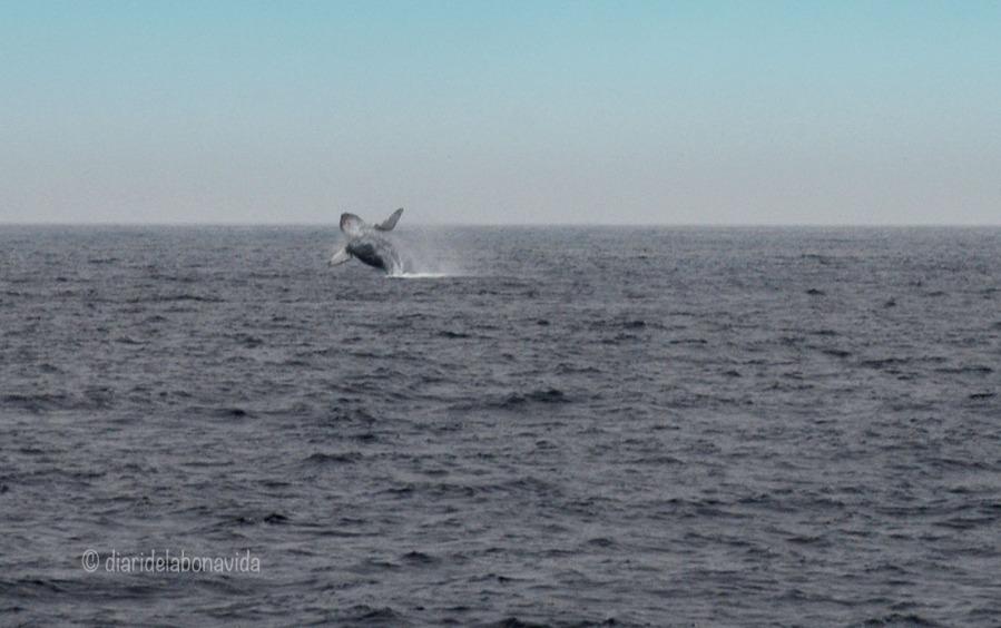 whale_monterey_10