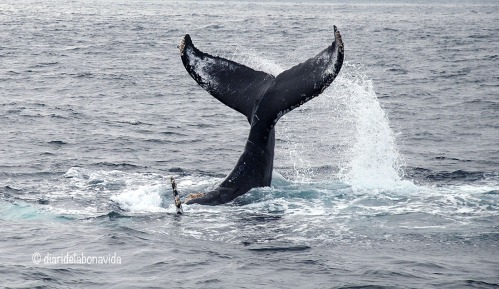 whale_monterey_11