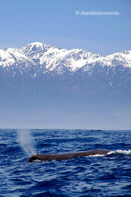 whale_newzealand_2