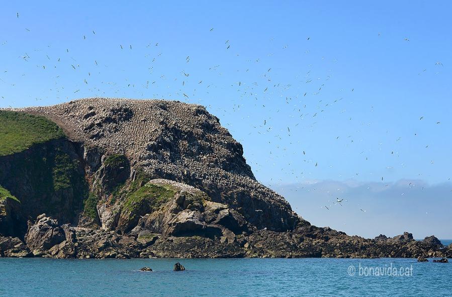 Els ocells son els reis de les illes