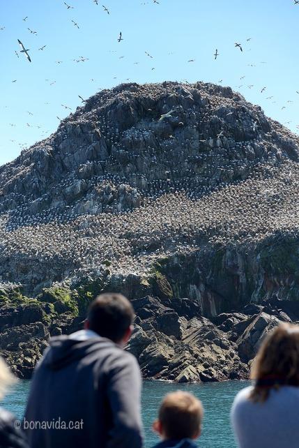 Milers i milers d'ocells habiten les illes