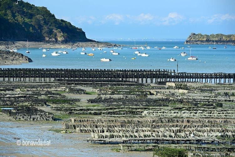 Els vivers d'ostres ocupen una part del litoral