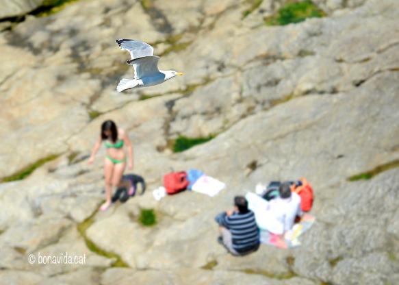 Banyistes i gavines comparteixen les platges