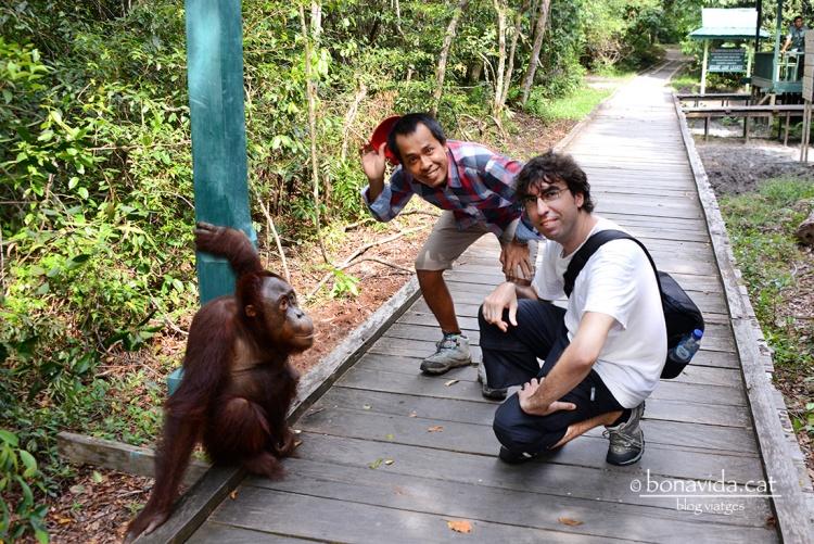 Arribem al Parc en companyia de Kres, el nostre guia, i ens rep un petit orangutà