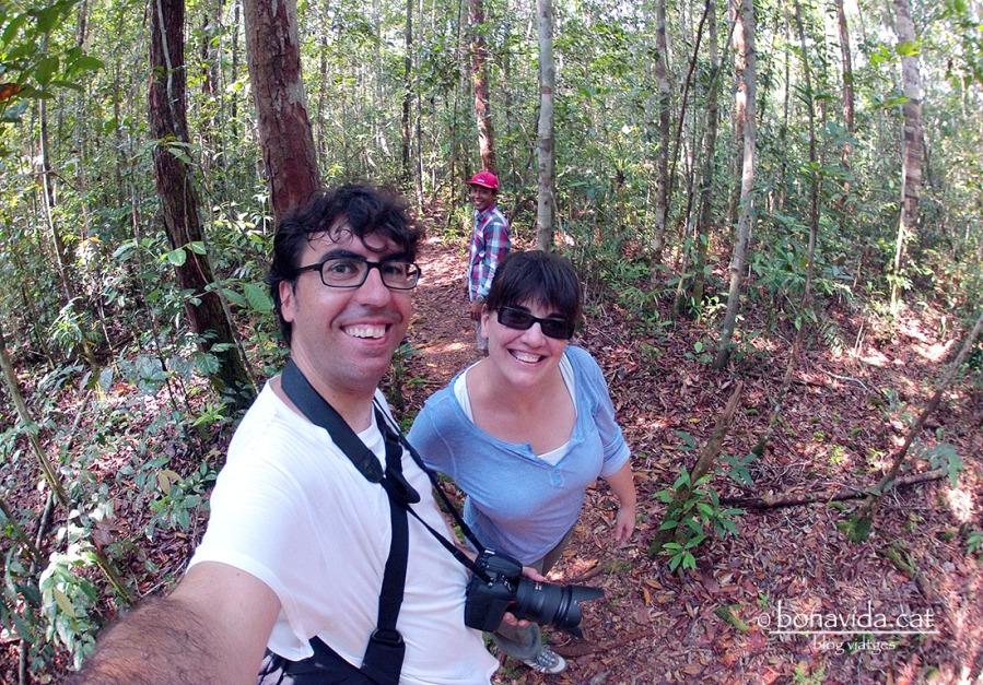 indonesia borneo orangutans selva