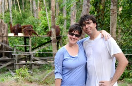 Orangutans a Borneo (els de darrera, eh?)