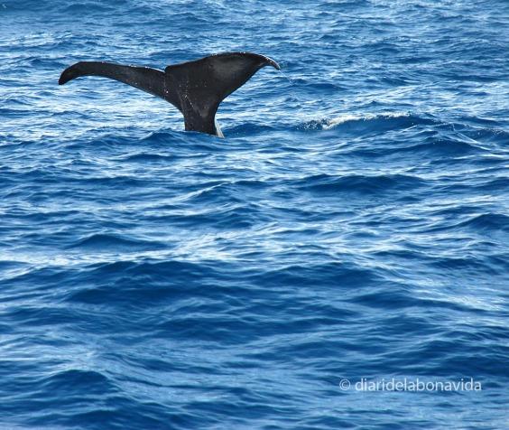 whale_newzealand_3