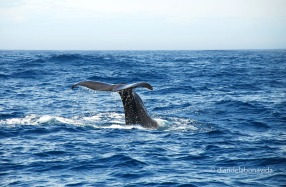 whale_newzealand_4
