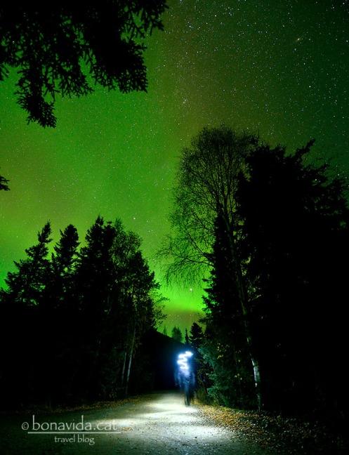 Caminar sota una Aurora, al mig del bosc, i sols... Una experiència irrepetible!