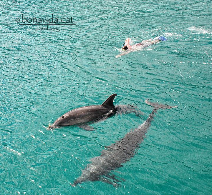 Nedant entre dofins