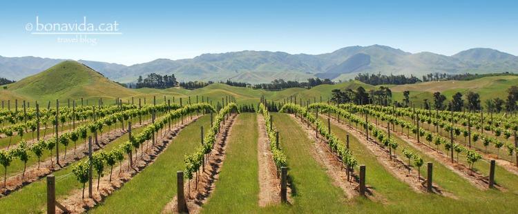 El vi és molt popular a Nova Zelanda, i trobem grans extensions de vinyes