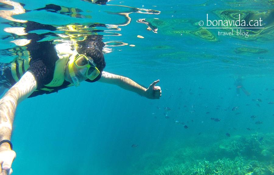 Practicant snorkel entre corall i peixos