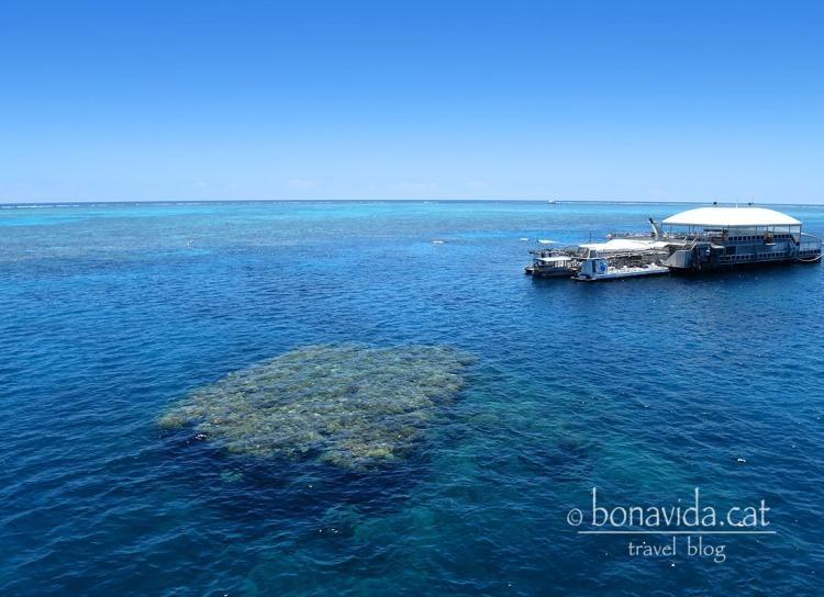 Després d'hora i mitja de navegació, arribem a una plataforma entre la Gran Barrera de Corall
