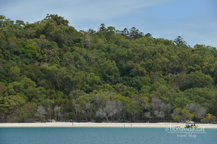 Tenim plaça per veure la famosa Whitehaven Beach!