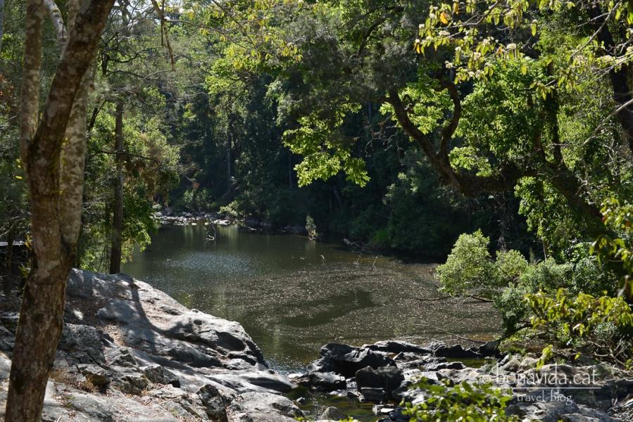Als rius poden observar-se ornitorrincs