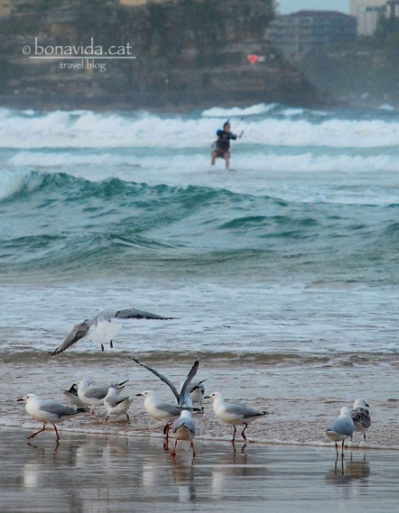 Veurem com practiquen kite-surf a Manly Beach
