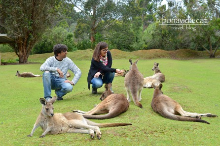 De ruta per Austràlia