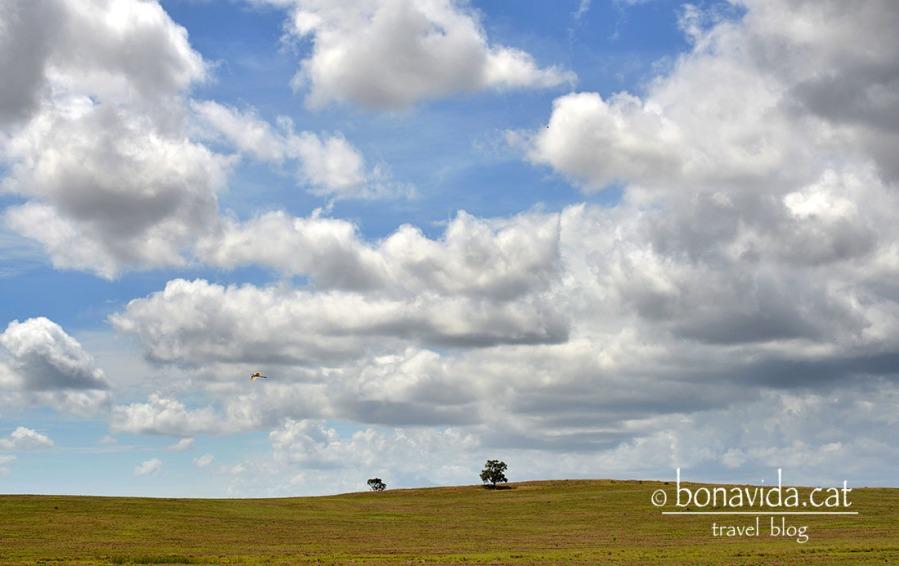 australia paisatge carretera