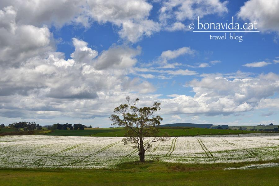 australia tasmania paisatge