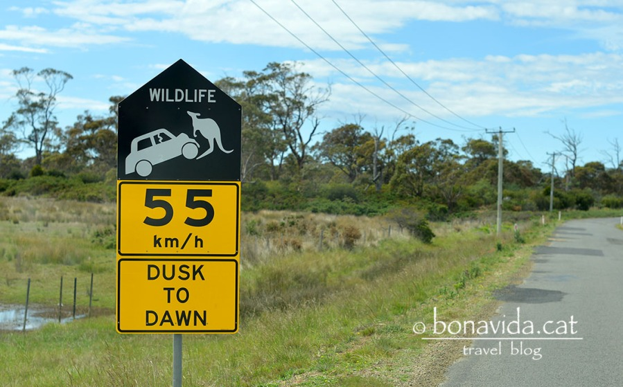 s'ha de vigilar amb els animals mentre conduim