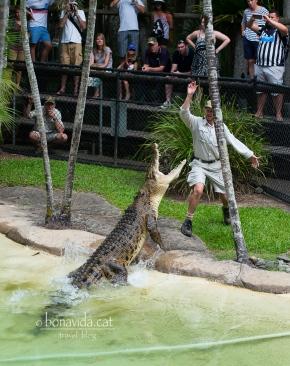 Xou amb cocodrils