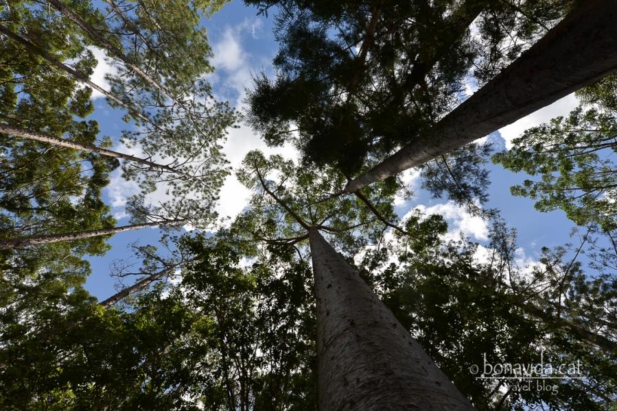 L'illa té una part molt gran de bosc