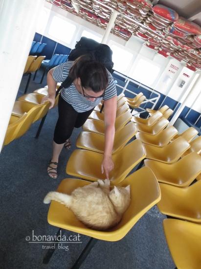 Entre els passatgers, la Cristina fa un amic