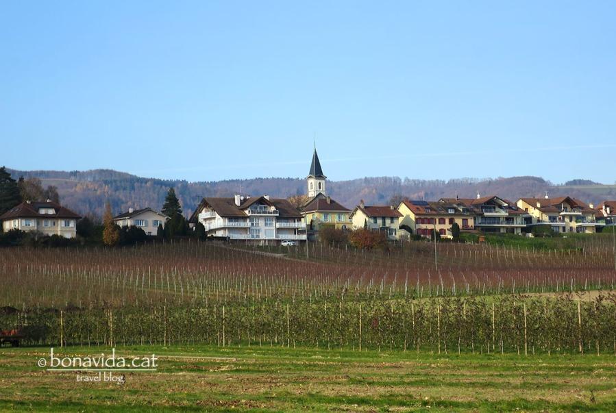 Camps de vinyes