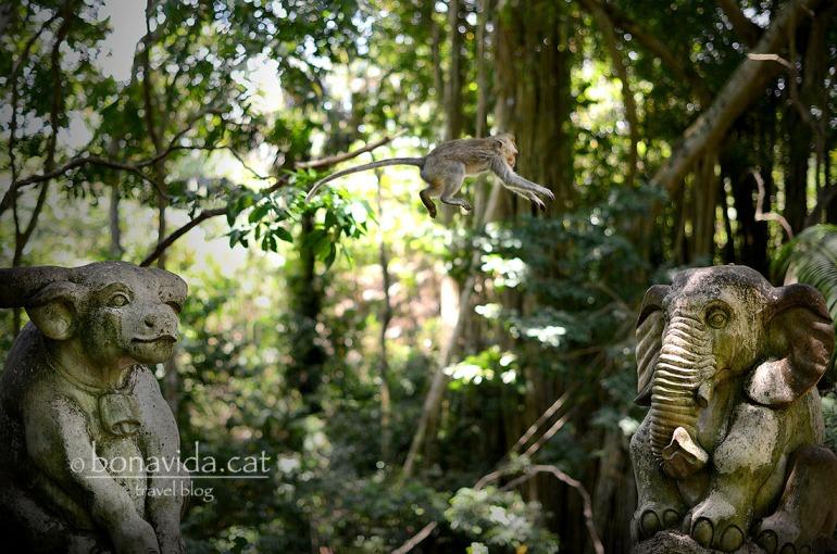 Acrobàcies a la selva!
