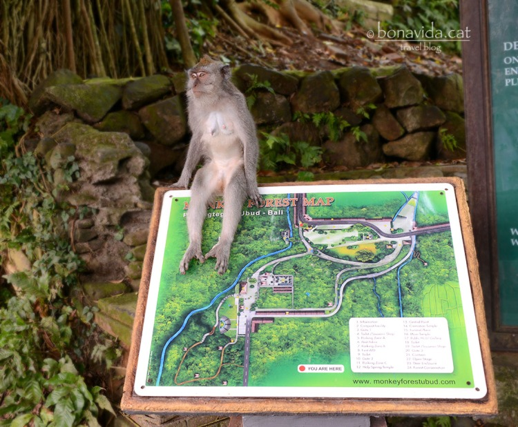 indonesia monkey forest 03