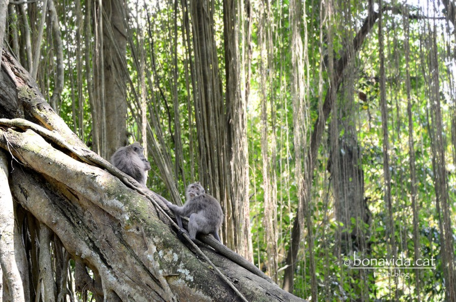 indonesia monkey forest 05
