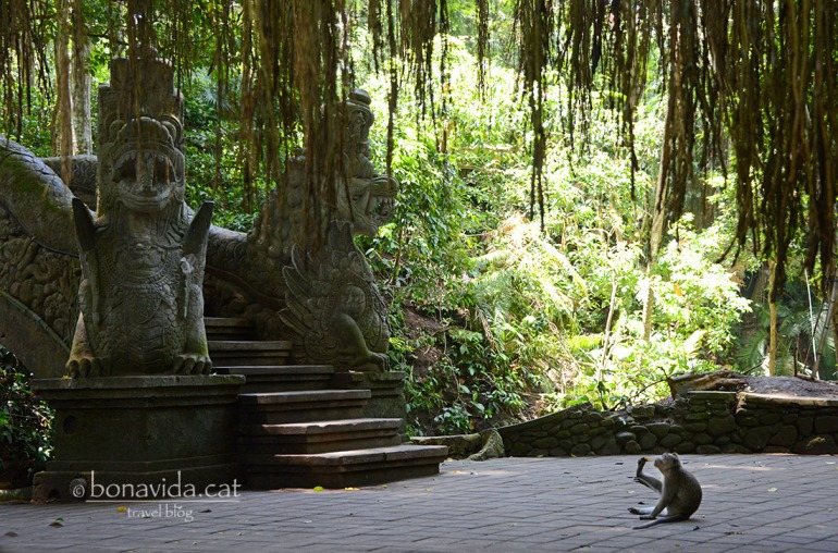 indonesia monkey forest 07