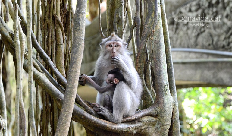 indonesia monkey forest 09