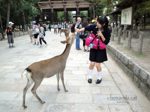 ...que busquen menjar dels turistes