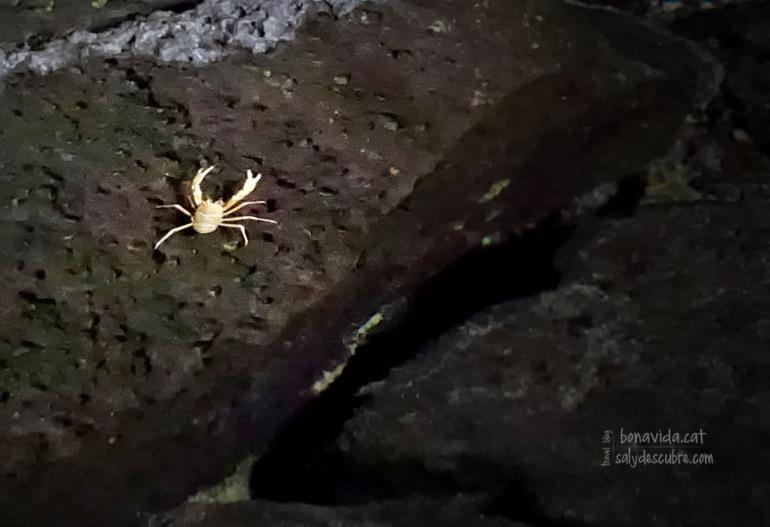 En aquest lloc existeix una espècie de crancs única al món, anomenats popularment Jameitos
