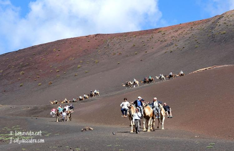 Al Parque es poden fer excursions en camell