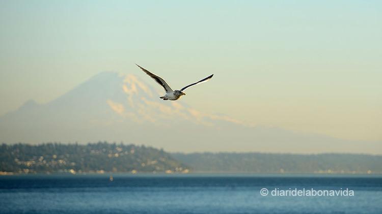 SEATTLE_0311_DBV