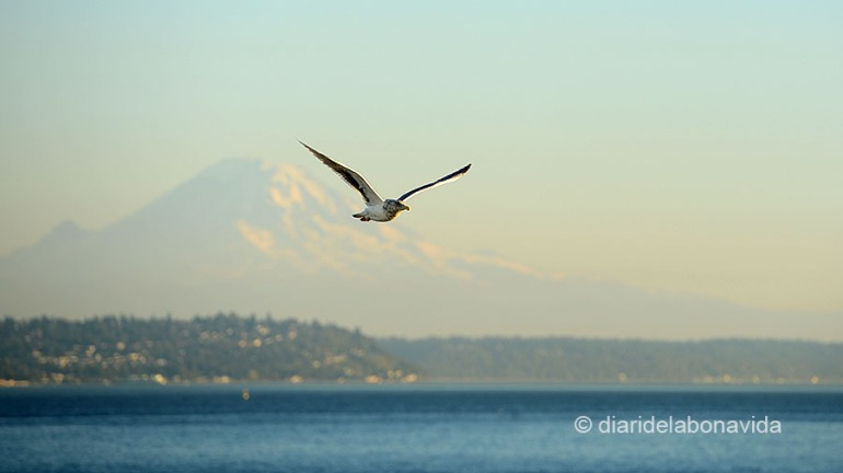 SEATTLE_0311_DBV
